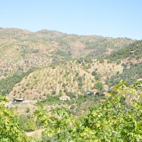 2500 hectares TURQUIE